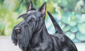 Knopa – Crufts 2015 Winner – Champion McVans To Russia with Love