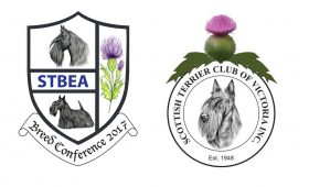 Scottish Terrier STBEA and The Scottish Terrier Club of Victoria Inc Logo's