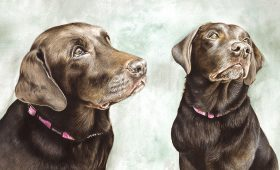 Chocolate Labs Buddy and Holly – 14″ x 10″ Watercolour Portrait